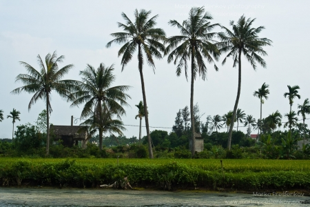 Tiny riverside rice field