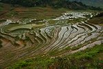 Paddy terraces full of water