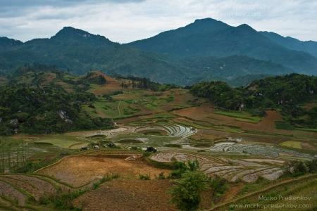 Rice sinkholes